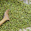 Green Gram (Nadu)  – பச்சை பயிறு