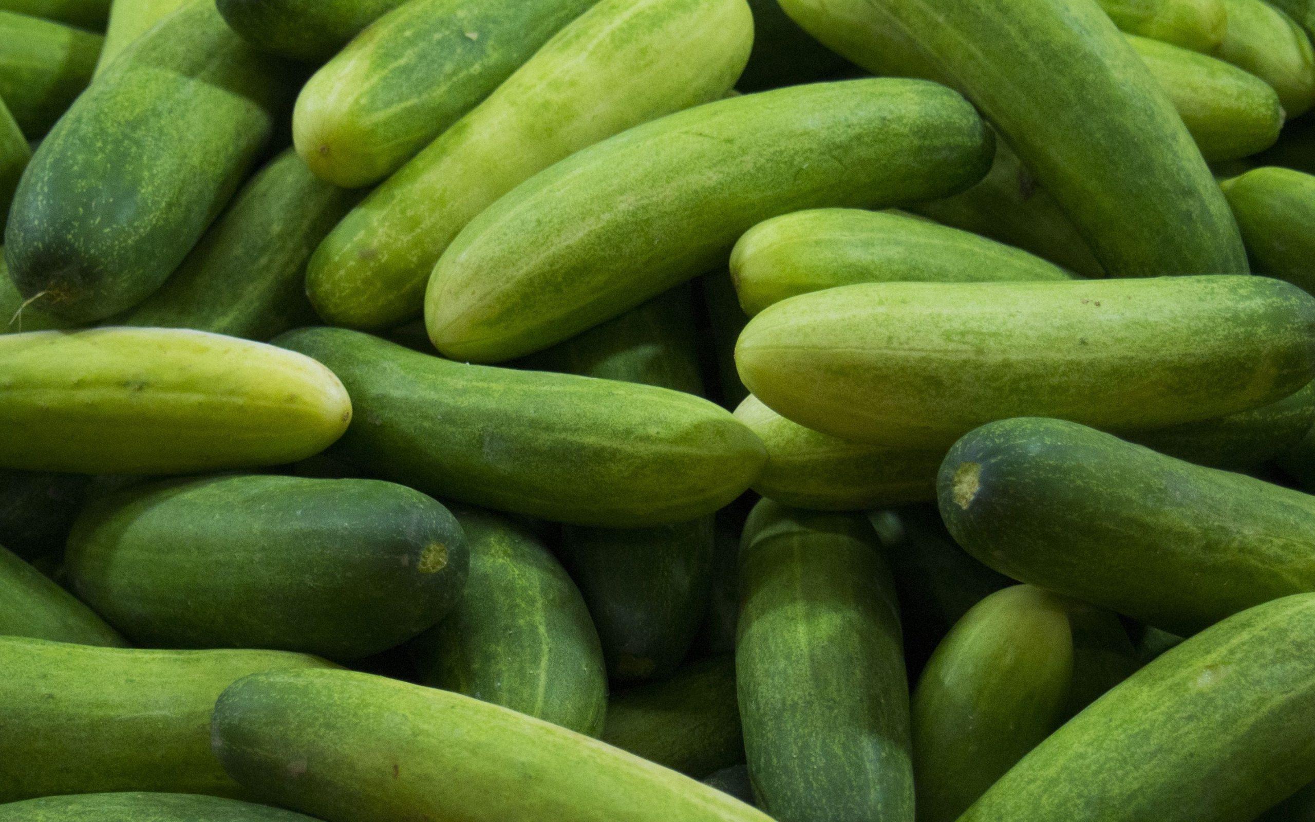 Cooking Cucumber / Veḷḷarikkay / வெள்ளரிக்காய்